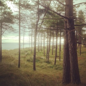 The Raven, a park with forest and beach walking paths